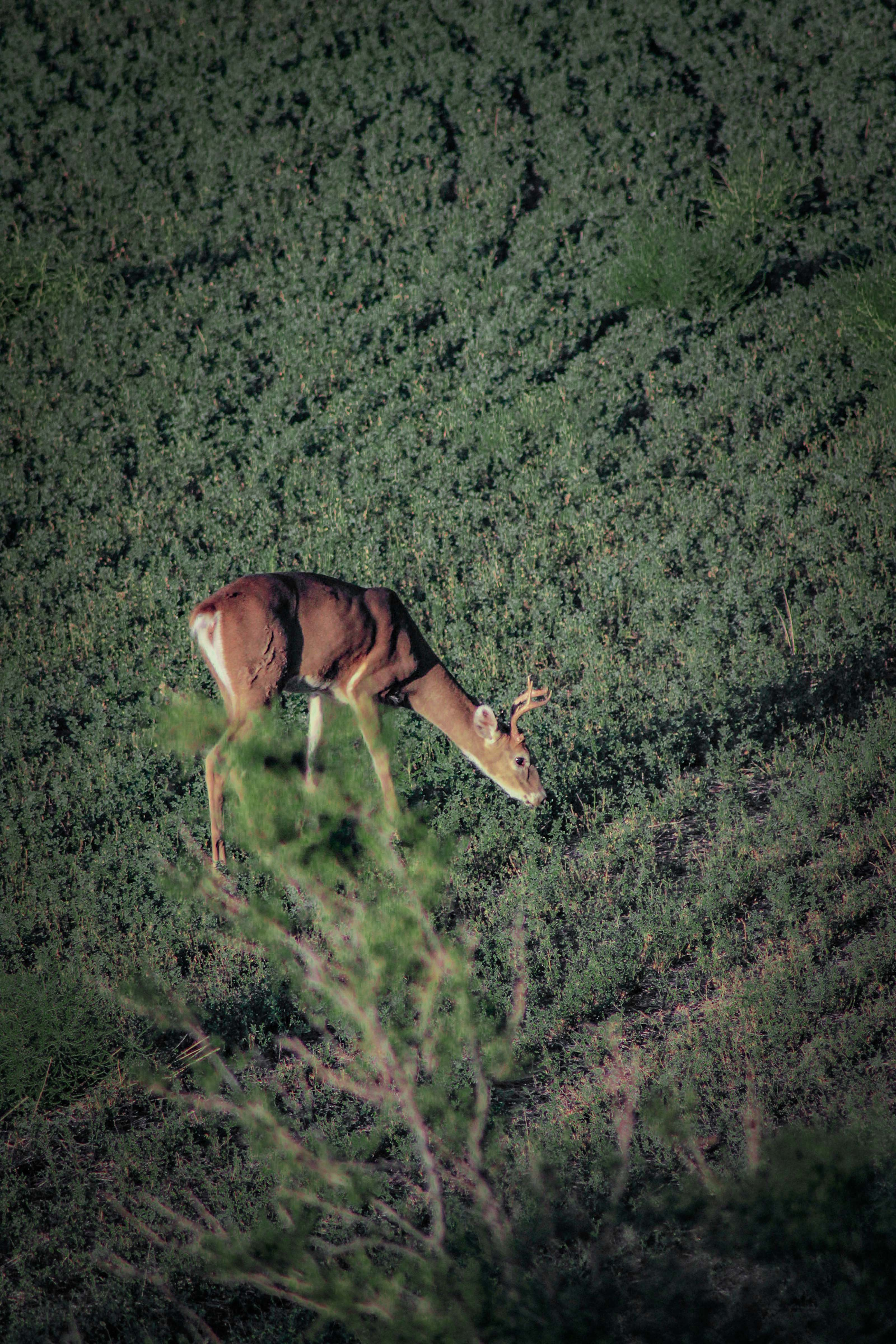 When bowhunting from a treestand that's roughly 20 feet high and shooting at deer 15 yards or more away, bowhunters might need to aim slightly lower than they would when shooting from ground level. Photo Credit: Tyler Ridenour