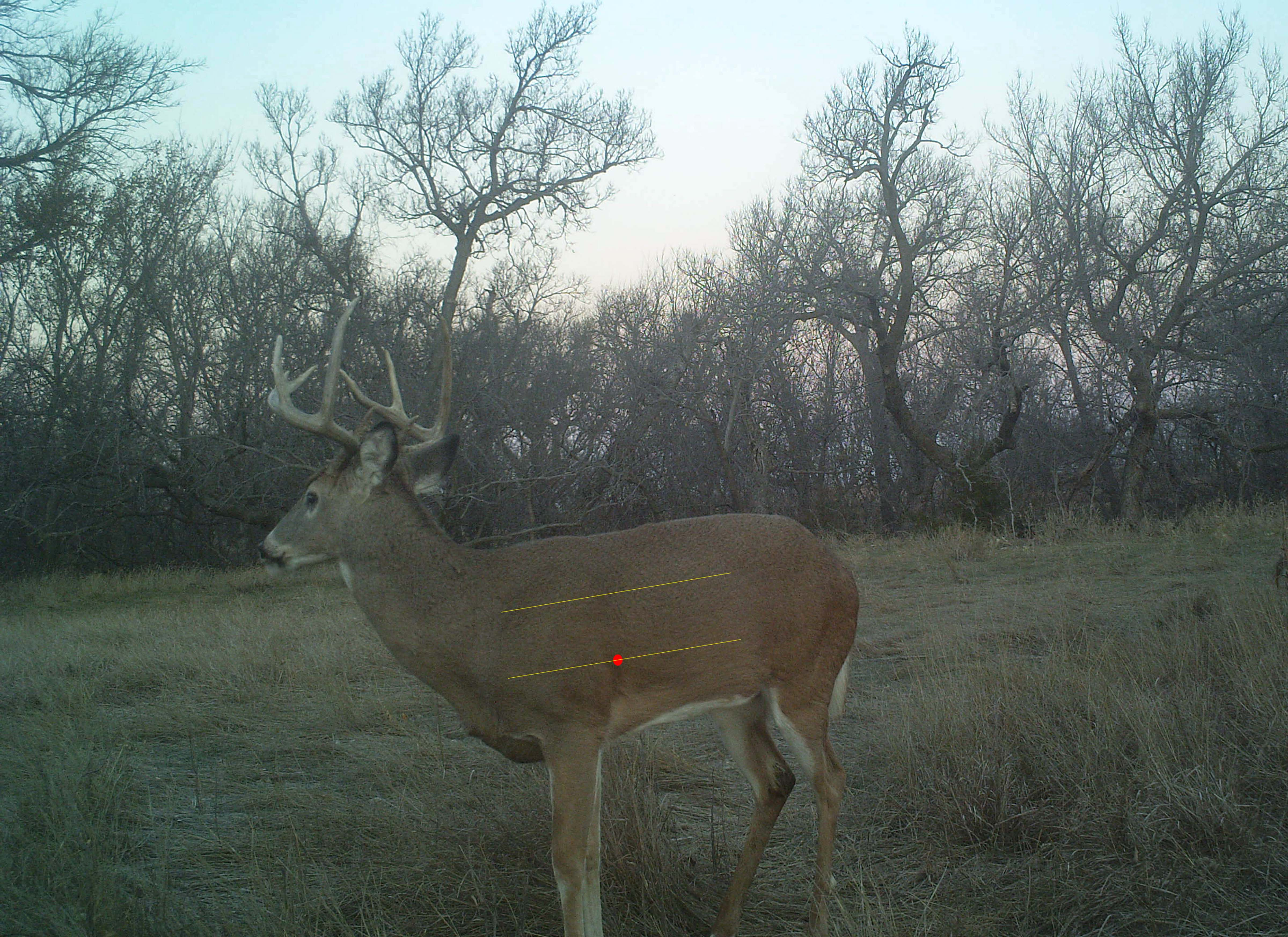 A quartering-toward shot angle occurs when a deer slightly faces the bowhunter but is not head-on. If the angle is extremely slight, an ethical shot is possible. Photo Credit: Tyler Ridenour