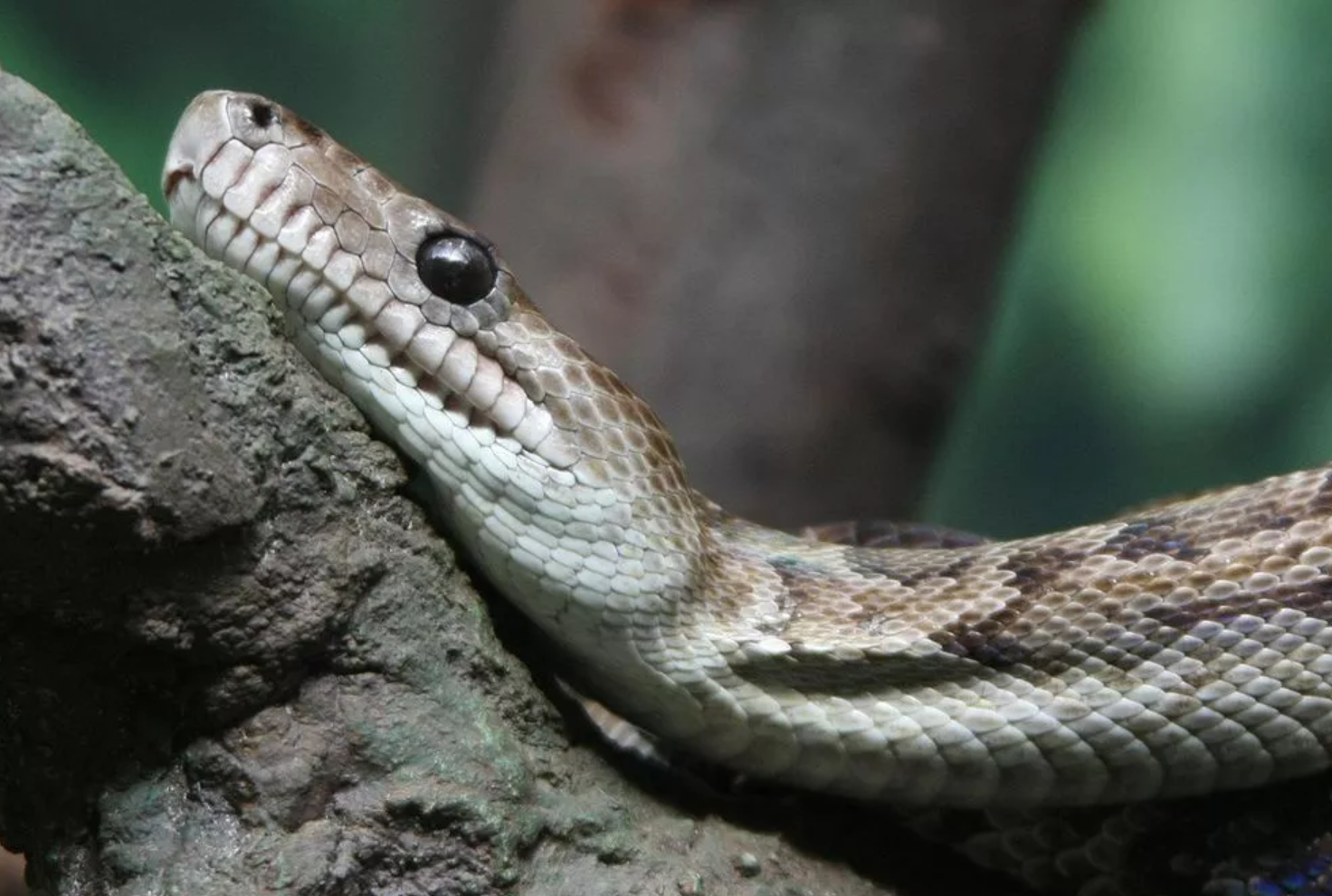 Embrace, Flee or Tolerate: How to Live with Snakes