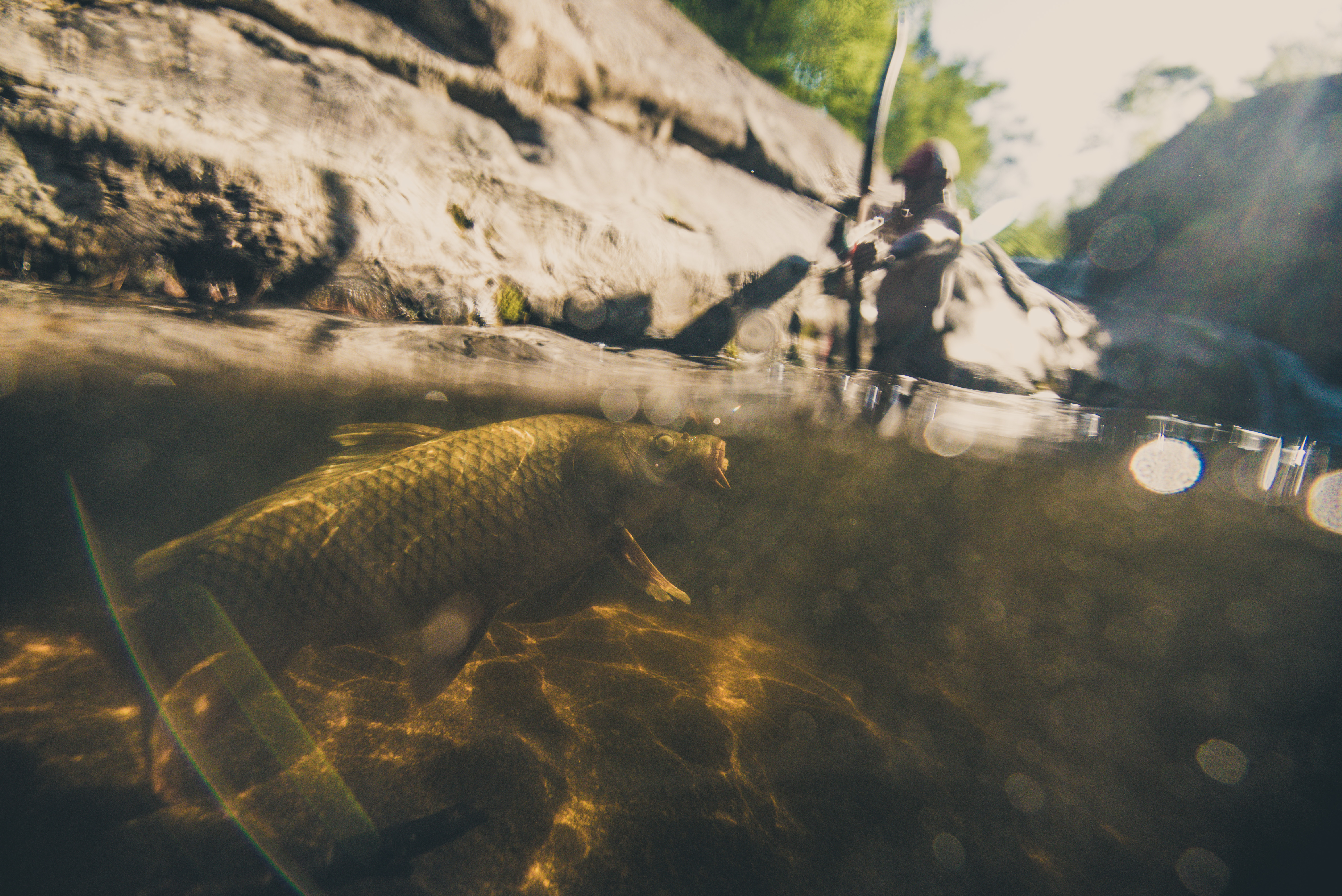 Bowfishing: What to Do with Your Fish