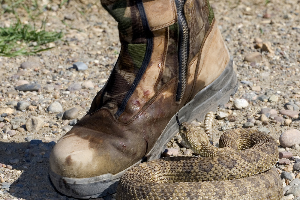 Snake Boots vs. Rubber Boots: What's the Difference?