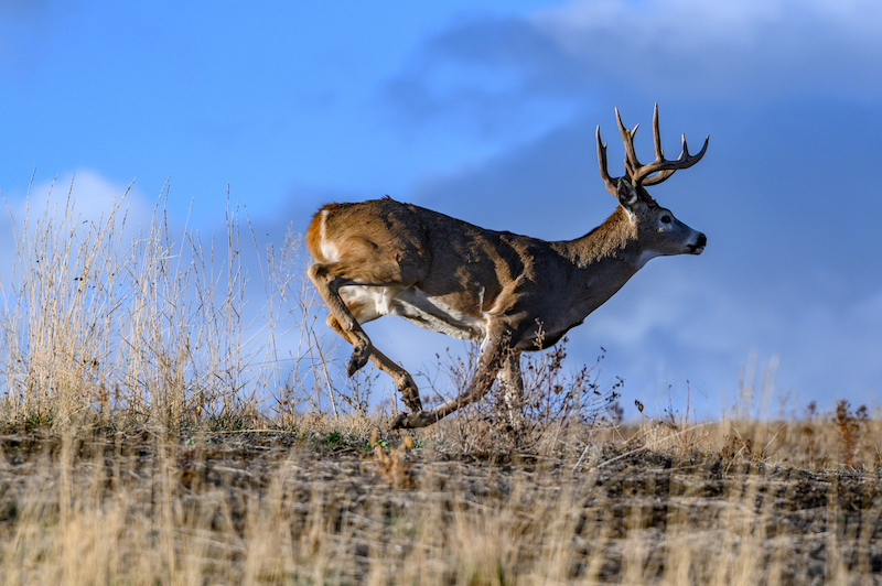 Beginner's Guide to Bowhunting White-tailed Deer