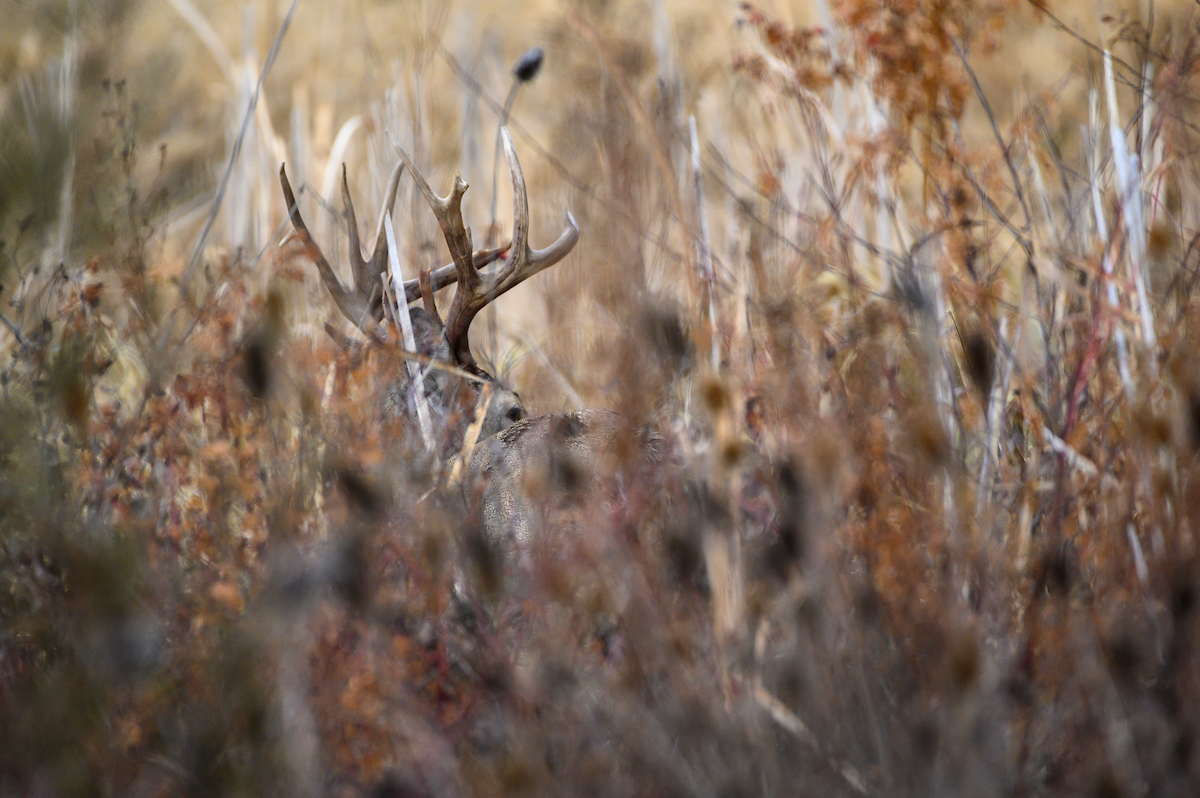 Strategies for Finding and Hunting Whitetail Bedding Areas