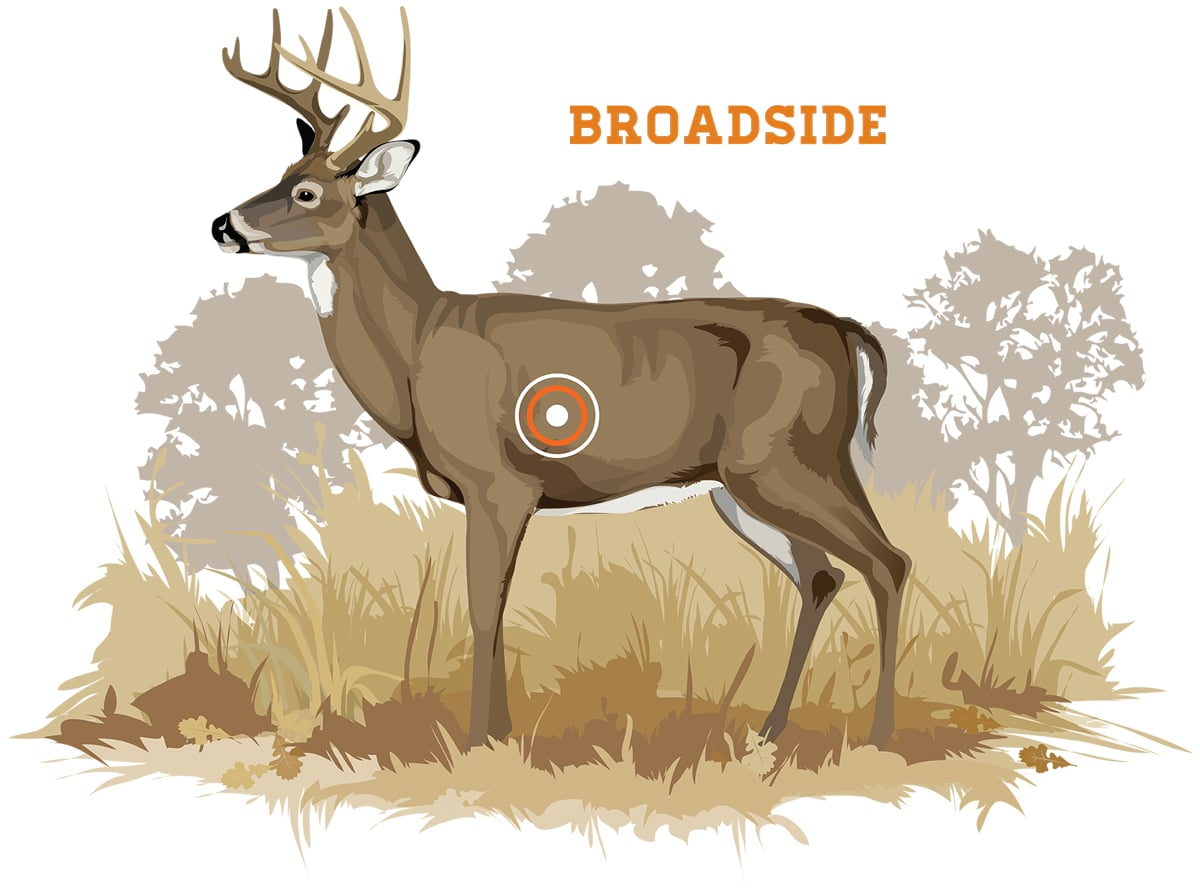 Broadside shots occur when either side of a deer is perpendicular to the bowhunter. This angle exposes the vitals and provides a large target for a lethal hit. Photo Credit: Ryan Kirby